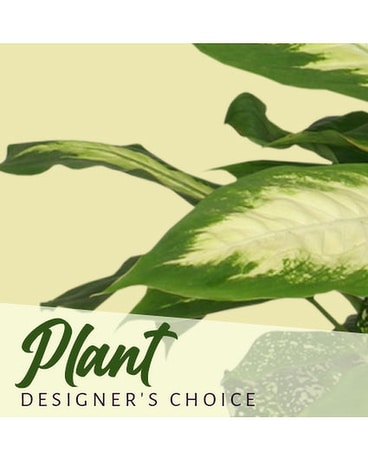 Designer's choice Green Plant Flower Arrangement