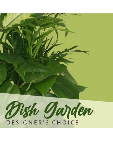 Designer's Choice Dish Garden Flower Arrangement
