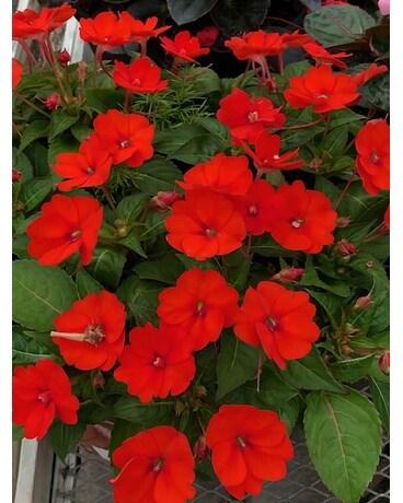 Porch Planters In Saline Mi Saline Flowerland Inc