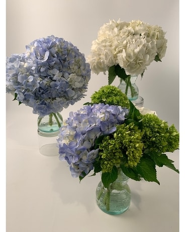Classic Hydrangea - Flower Arrangement