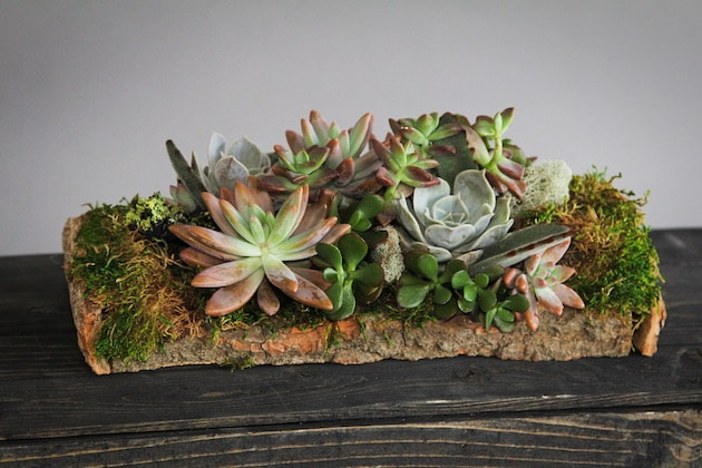 Succulent Woodland Flower Arrangement