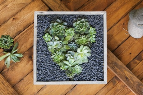 Art Of The Heart Succulent Box Dish Garden Plant