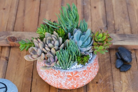 Succulent Reef Flower Arrangement