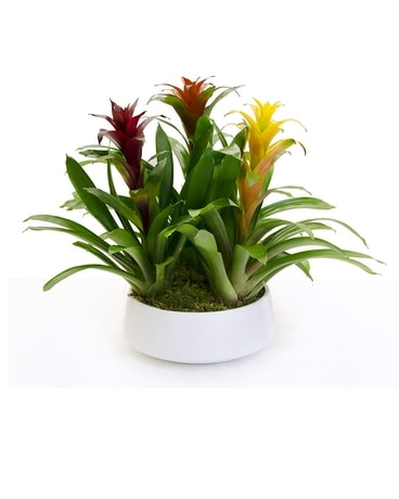 BROMILIAD MANIA Flower Arrangement