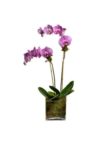 Orchid Plant Flower Arrangement