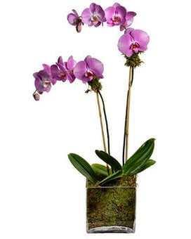 Double Orchid Plant Flower Arrangement