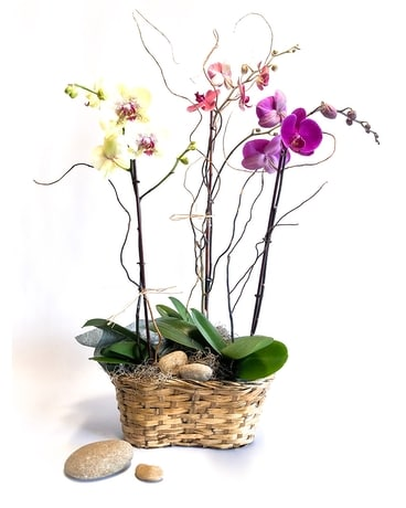 Luxe Orchid Flower Arrangement
