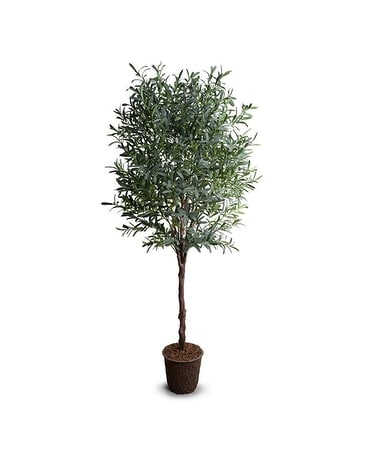 New Growth Designs 8' Olive Tree Gifts