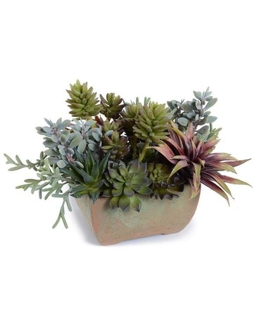 New Growth Designs Succulents, Mixed Garden Flower Arrangement