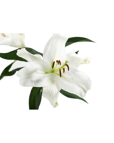 Market / Wholesale White Lilies Flowers