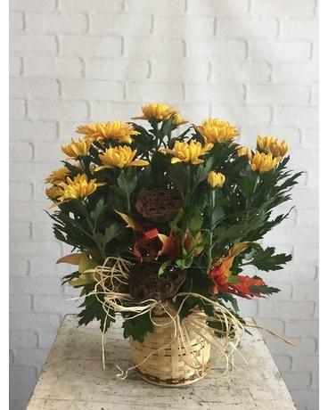 Quick View November Birthday Chrysanthemum Flower Arrangement