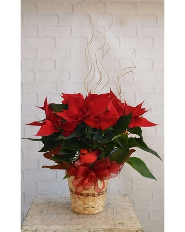December Birthday: Poinsettia Flower Arrangement