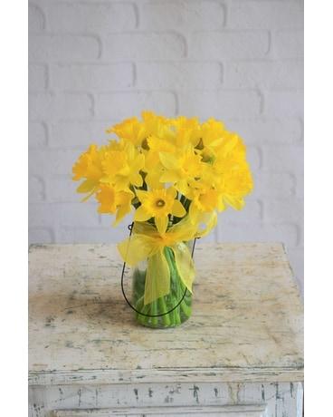 March Birthday Daffodil Fallon S Flowers