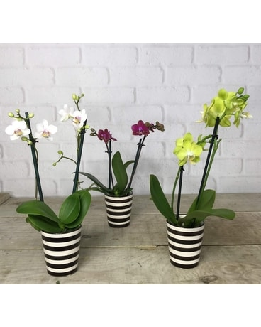 Orchid - Round Vase Flower Arrangement