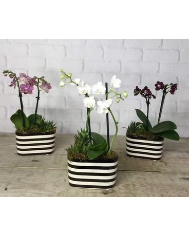 Orchid Oblong Vase Jennies Flowers