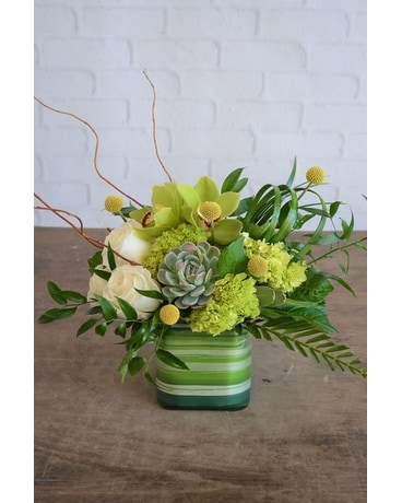 Succulent Green In Raleigh Nc Fallon S Flowers