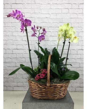 Orchid Plant Basket