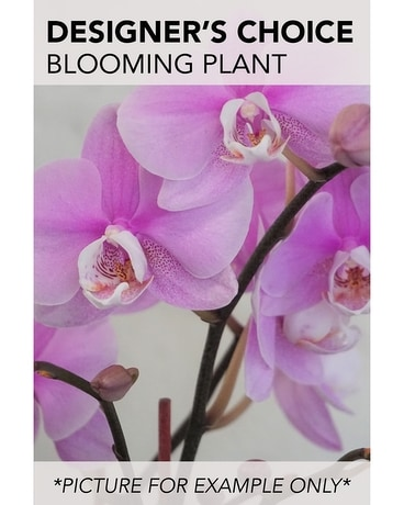 Designer's Choice - Blooming Plant Flower Arrangement