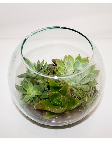 Bubble Terrarium Plant