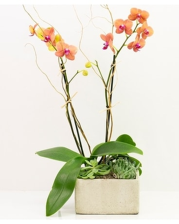Orchid Romance Flower Arrangement