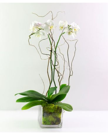 Orchid Plant-White Flower Arrangement