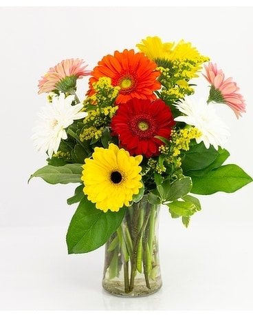 Just Daisy Flower Arrangement