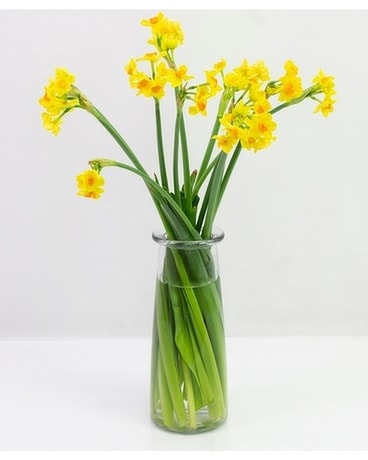 Just Daffy Flower Arrangement