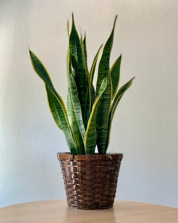 Snake Plant Flower Arrangement