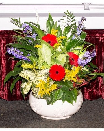 Gentle Dish Garden Flower Arrangement