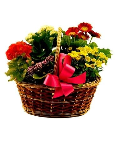Blooming Basket Flower Arrangement
