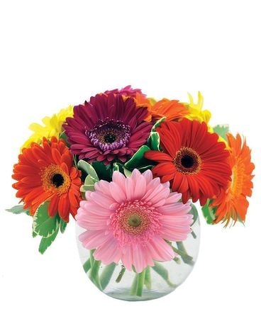 Dizzie Daisies Flower Arrangement