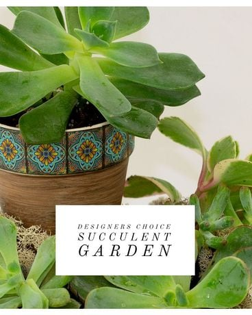 Designer's Choice Succulent Garden Flower Arrangement