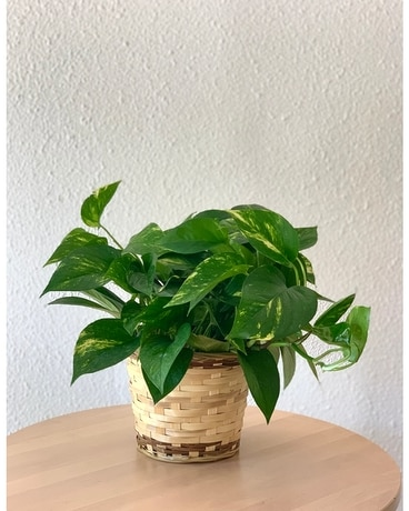 Pothos Plant Flower Arrangement