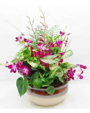 Green Dish Garden with Dendrobium Orchids Flower Arrangement