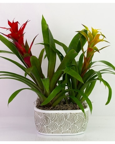 Bromeliad Garden Flower Arrangement