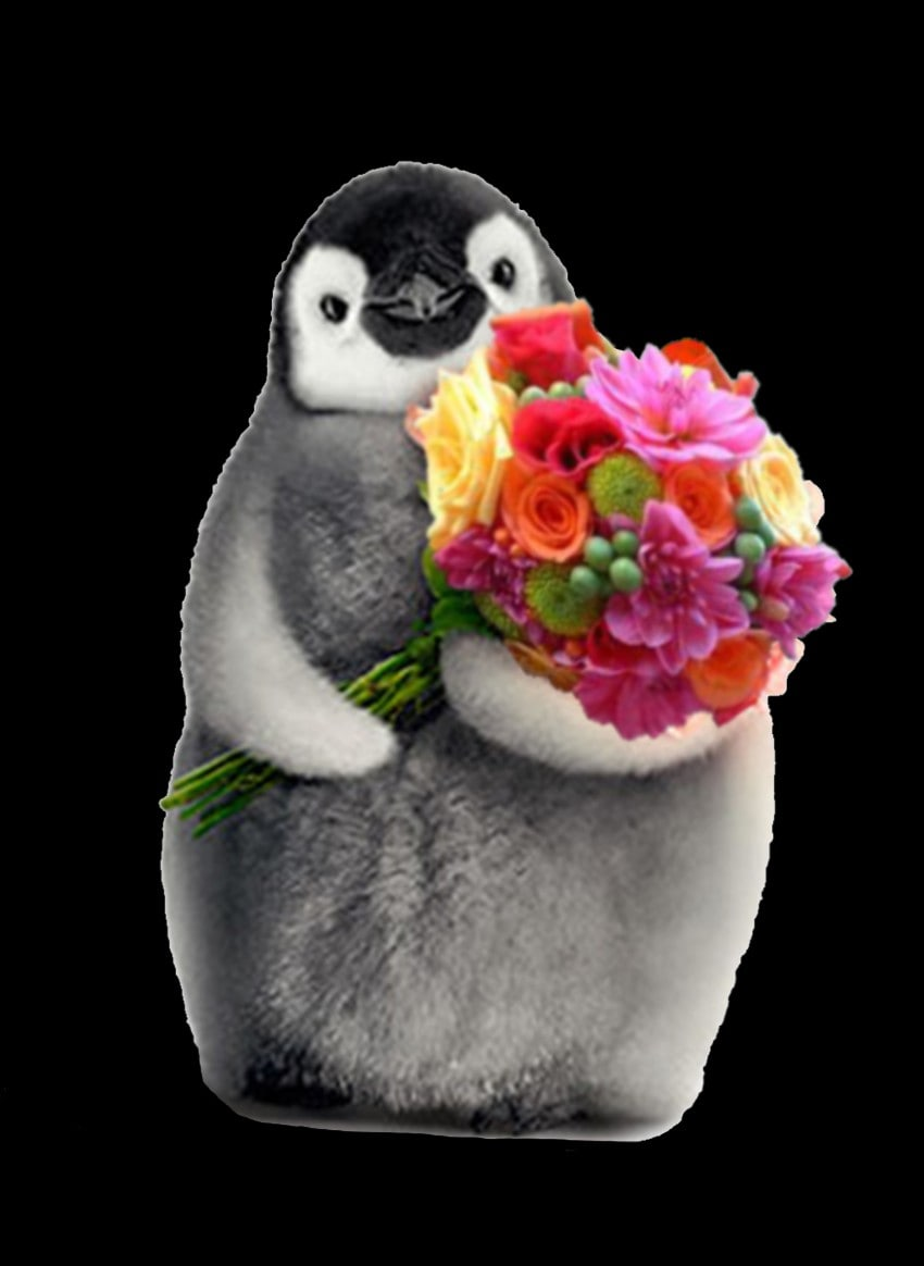About Penguin Flowers Corvallis Or Florist