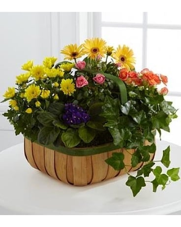 The Gentle Blossoms™ Basket Flower Arrangement