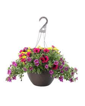 12 Blooming Hanging Basket - Mixed Plant