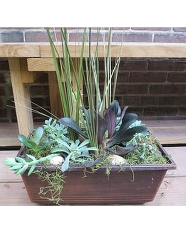 Succulent Garden (Large Rectangular) Flower Arrangement