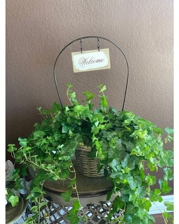 Welcome Basket With Ivy Plant