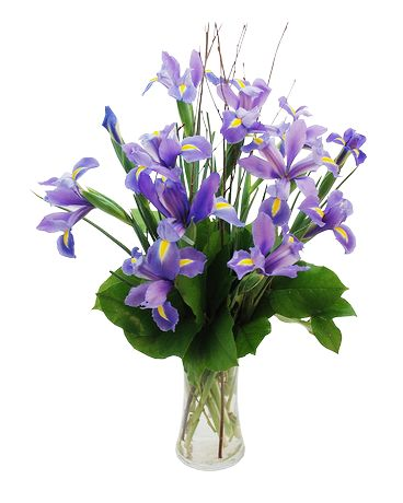 Iris in Bloom Flower Arrangement