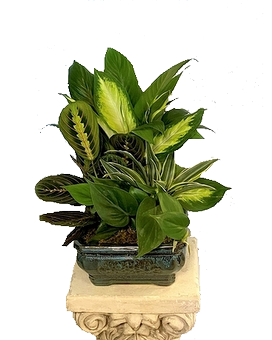 Eight Inch Dish Garden Plant