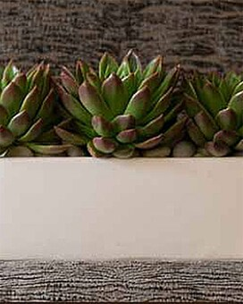 Succulent Garden Flower Arrangement