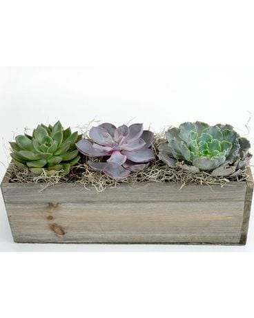 Wood Succulent Garden Flower Arrangement