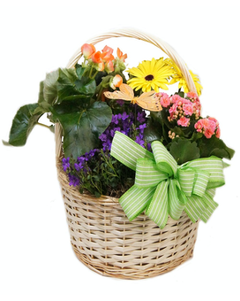 Assorted Blooming Plant Basket Flower Arrangement
