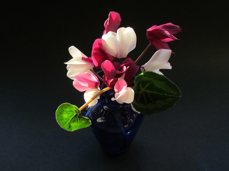 Seattle Flowers Since 1947
