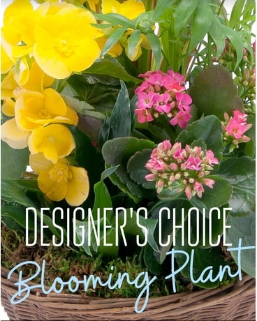 Designer's Choice - Blooming Plants Flower Arrangement