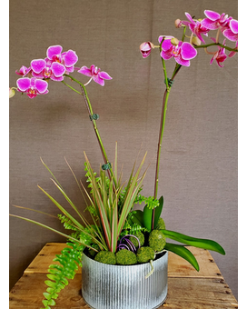 TCL's Orchid Planter Flower Arrangement
