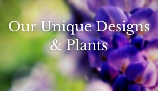 Our Unique Designs & Plants