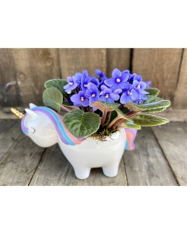 Magical Violets Plant